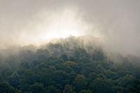 Nebelschwaden überm Wald