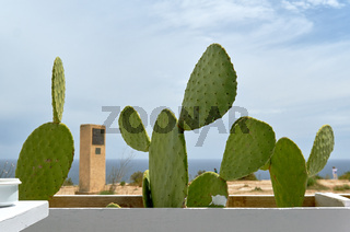 Close-up of cultivated cactuses in a row against blue cloudy sky and Mediterranean Sea. Spain