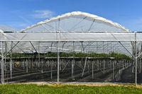 Gewächshaus für den Anbau von Erdbeeren (Fragaria) im Hochanbau, Kanton Thurgau, Schweiz
