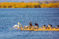 Various types of birds wintering at Lake Hula