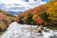 Autumn fall forest Nikko Japan