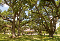 Old Growth Oak Trees Shade Plantation House Rural Louisiana