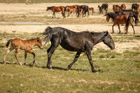 horses are on the road. Behind the steppe landscape