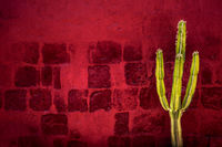Green cactus over red textured wall