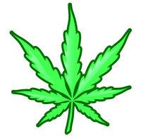 Marijuana leaf isolated on white background