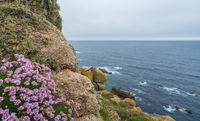 Purple flowers on the Lands End