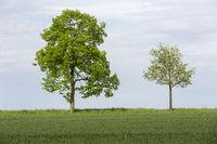 Bäume mit frischen Grün im Frühling, Deutschland