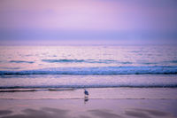 Seagull bird on the beach at dusk