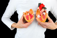 Woman holding human heart model at white body