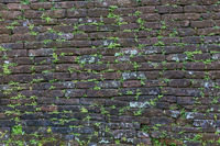Dark old brick wall with small green plant shoots