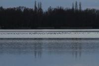 Wasservoegel auf Eisflaeche