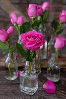 Pinke Rosen in kleinen Flaschen