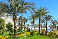floral garden with palm trees near the beach