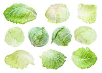 various leaves and heads of savoy cabbages