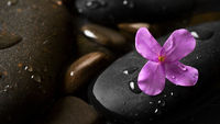 Black wet pebbles with flower background