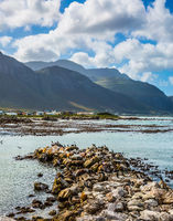 African penguins, boulders and seaweed