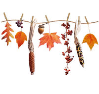 Autumn composition on white background