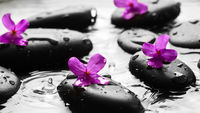 Wet pebbles with flowers background wallpaper