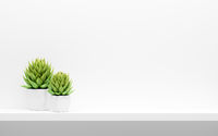 shelf on white wall with green potted plants mock up