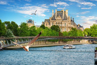 Seagulls over Seine