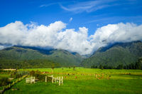 New Zealand countryside landscape