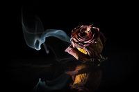 trockene Rose mit aufsteigenden Rauch