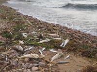 Sommerliches Fischsterben wegen Hitze