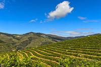 Weinbergterrassen in der Weinregion Alto Douro