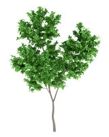 orange tree isolated on white background. 3d illustration