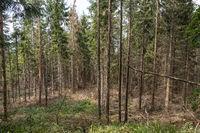 Große Waldschäden
