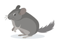 Cute gray chinchilla icon, fluffy pet, domestic animal, rodent, vector illustration