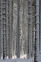 Verschneiter Winterwald in Südbayern, Deutschland