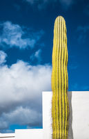 Giant cactus over blue sky, Lanzarote, Canary Islands, Spain