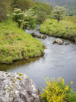 Small river in county kerry ireland