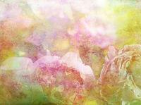pastell farben hell sommer blumen