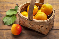 basket of ripe apricot on rustic wood