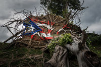 Fallen tree from Hurricane Maria in San Juan
