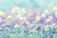 Beautiful micro wildflowers in the dreamy meadow. Delicate pink and blue colors pastel toned. Shallow depth macro background. Greeting card template. Copy space. Nature floral springtime
