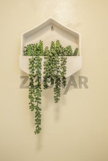 White tray with ornamental plant mounted on the white wall of a bathroom