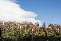 Sunny Autumn Patagonian Vineyard. Esquel in late autumn, when grapes harvested, Argentina