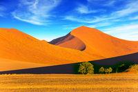 The dunes of the Namib desert