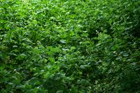 Dornengestrüpp sowie Grünpflanzen im Unterholz
