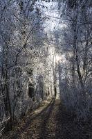 Waldweg im Winter