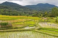 Landschaft mit Reisfeldern, Luang Prabang, Laos