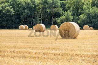 Autumn landscape. Harvest field with straw bale