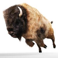 Digital 3D Illustration of a Bison
