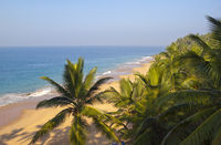 seashore with  palm trees. India. Kerala