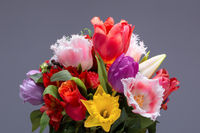 A bunch of colorful tulip flowers isolated on grey background