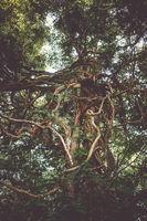 Fantasy tree in Nikko botanical garden, Japan