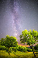 Green plum trees Milky way night sky